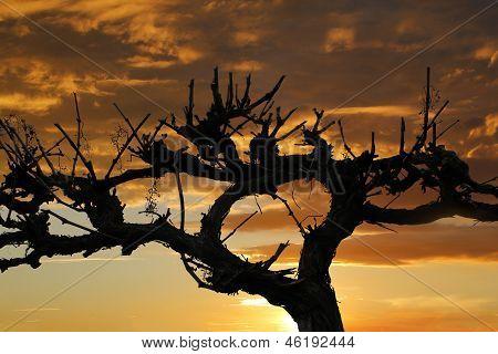 Grape Vine Silhouette