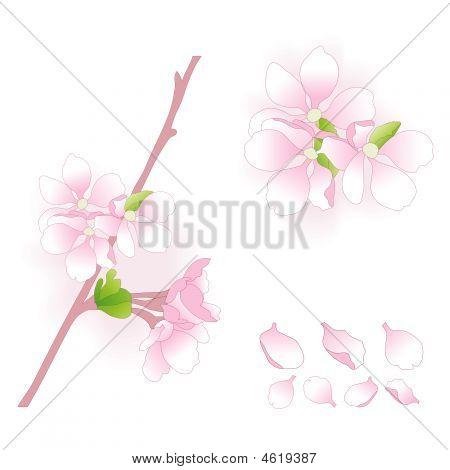 Apple Flowers Elements Set