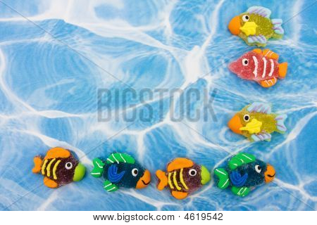 Colourful Fish Border