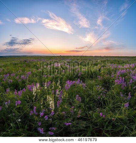 Spring Meadow With Flower