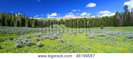 Bighorn National Forest Panoramic