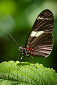 picture of dory  - Macro image of Doris Longwing butterfly  - JPG