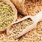 stock photo of mung beans  - Green buckwheat wheat oat and mung  - JPG