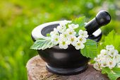 foto of stamen  - mortar with blossom hawthorn outdoors - JPG