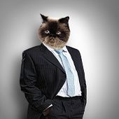 stock photo of puss  - Funny fluffy cat in a business suit businessman - JPG