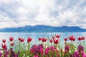 foto of montre  - Flowers near the Geneva lake Montreux - JPG