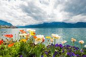pic of montre  - Flowers near the Geneva lake Montreux - JPG