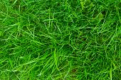 picture of foliage  - green bright grass for background - JPG