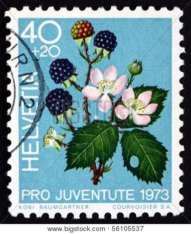 Postage Stamp Switzerland 1973 Blackberries, Fruit Of The Forest