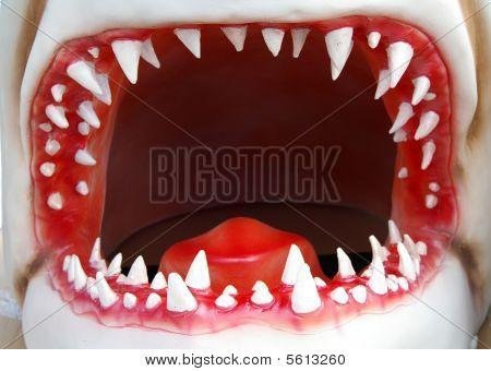 Open Shark Mouth