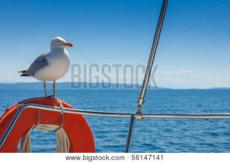 Seagull standing on the orange lifebelt against the blue sky