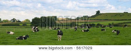 Panorama de ganado
