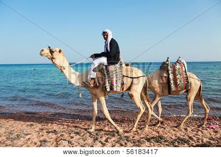 DAHAB, SINAI - JANUARY 29, 2011: Bedouin man with camels on beach during safari in Dahab, Egypt on January 29, 2011. Local bedouins rely on tourism to make a living in the harsh desert.
