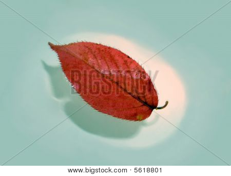 Red leaf on water