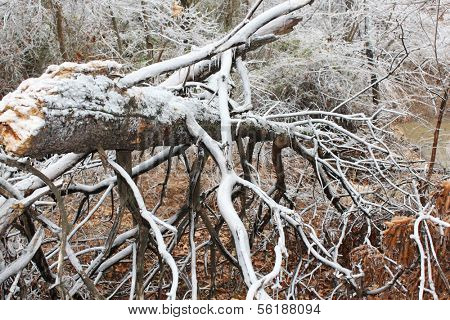 Trees break under the weight of winter ice