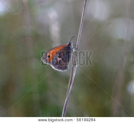 Small Butterfly Sitting On A Blade Of Grass