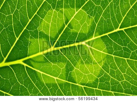 A fine green leaf with a symbol for sustainability.