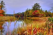 stock photo of wetland  - Protected wetlands reflect the beauty of the fall forest - JPG
