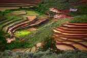 Green hills with red soil, green rice and traditional african house. Madagascar