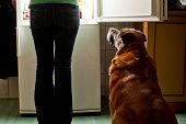 Dog staring at fridge