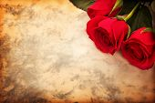 picture of rose bud  - Valentine - JPG