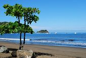picture of papagayo  - Bahia Coco beach - JPG