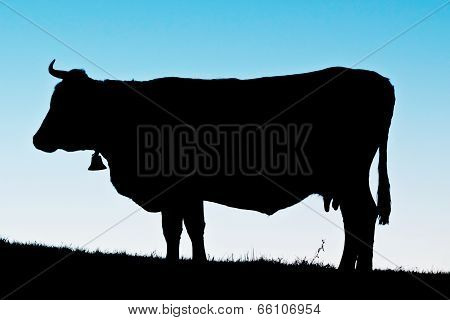 silhuette of cow at dawn