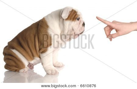 Person Wagging Finger At Bulldog Pup