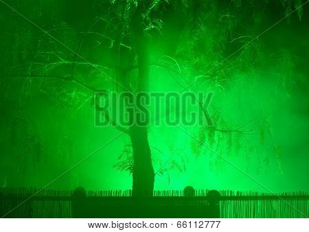 Tree In Fog And Night Illumination