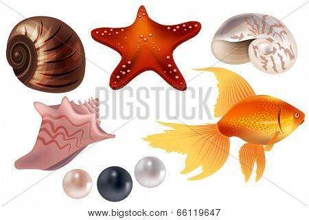Realistic set with sea shells. Part 1.