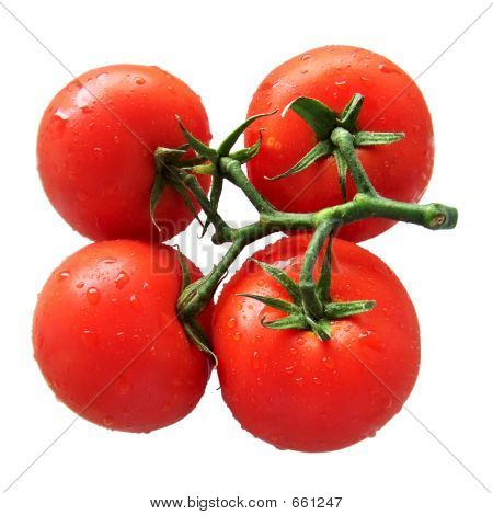 Four Connected Tomatoes Isolated