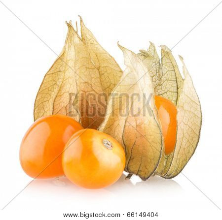 ripe physalis isolated on white background
