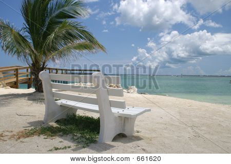 Bench With Palm Tree