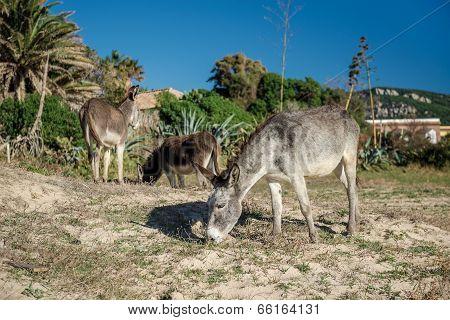 Donkey Feeding Outdoors
