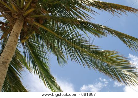 Palm Tree Slanted