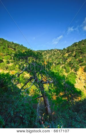 Mountains Of Cyprus, Troodos Waterfalls