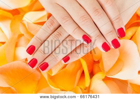 Female Hand Holding Flowers