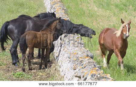 beautiful horses in pasture in the countryside of Puglia.