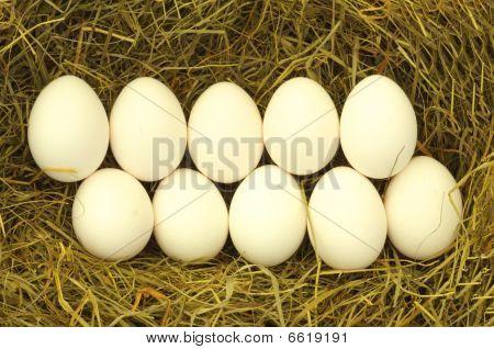 Blank Egg In Hey
