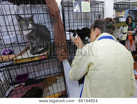 Volunteer works with crated cats