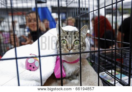 Cat in crate with pink ribbon covered by blanket