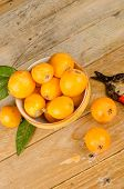 stock photo of loquat  - A bowl with freshly picked loquats next to old pruning shears - JPG
