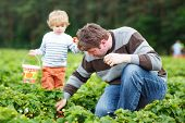 foto of strawberry blonde  - Young father and little son on organic strawberry farm in summer picking berries - JPG
