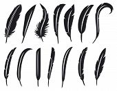 foto of feathers  - collection of feathers  - JPG