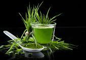 picture of chlorella  - Young barley and chlorella spirulina - JPG