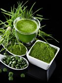 stock photo of chlorella  - Young barley and chlorella spirulina - JPG