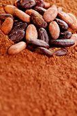 stock photo of cocoa beans  - raw cocoa beans on cocoa powder  - JPG