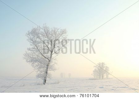 Frosty winter tree
