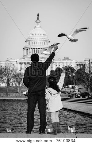 Unidentified dad and daughter feed the seagulls in front of the reflection pool of Capitol  Building - Washington DC, USA