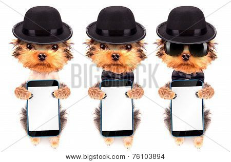 Dog dressed as mafia gangster with phone
